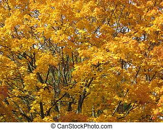 autumn in a city park