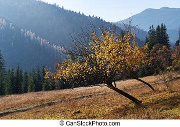 Golden autumn in the mountains