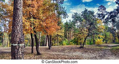 Golden autumn in the park of Partisan Glory in Darnitsa