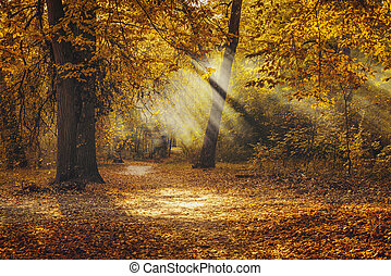Golden autumn in the park