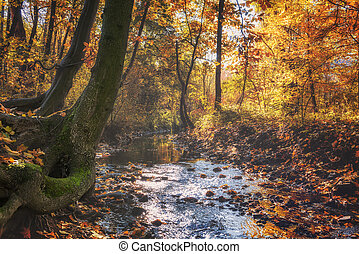 Golden autumn in the sunny park with small stream.
