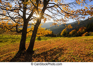 Golden autumn landscape in the morning sun