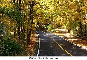 golden autumn lane