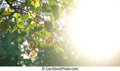 Golden autumn leaves branch