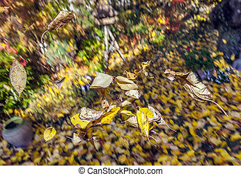 golden autumn leaves flying
