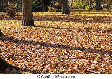 Golden autumn leaves.