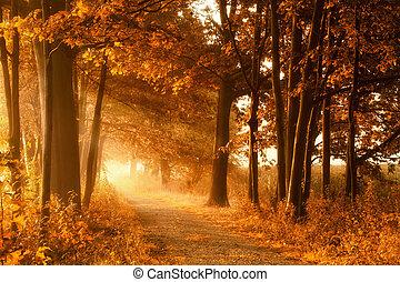 Golden autumn lightbeams on a footpath