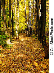 Golden autumn path