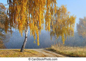 Golden autumn scene