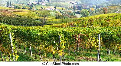 Golden autumn scenery. Vineyards of Piedmont, Itlay