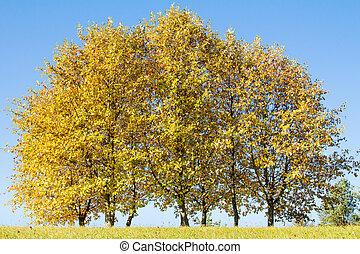 Golden autumn trees