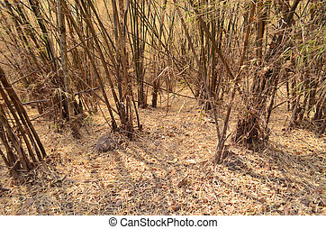Golden Bamboo Forest