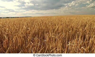 golden barley slide rail shot