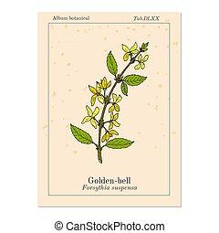 Golden bell Forsythia suspensa , medicinal plant. Hand drawn botanical vector illustration