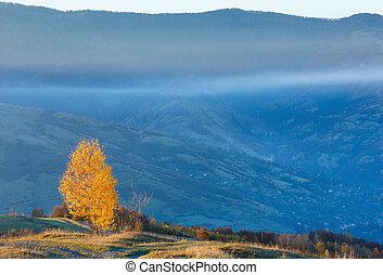 Golden birch trees in misty autumn mountain.