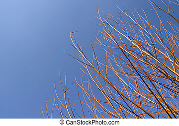Golden branchs over a shaded blue sky (horizontal)