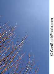 Golden branchs over a shaded blue sky (vertical)