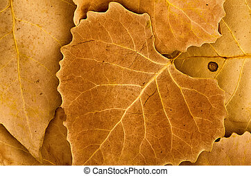 Golden brown autumn leaves