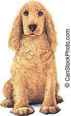 Spaniel dog - Golden Cocker Spaniel dog. Sitting