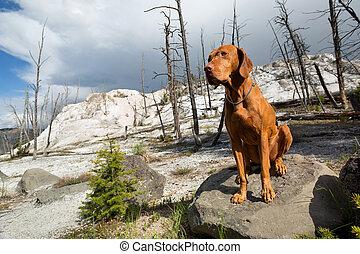 golden color dog in wasteland