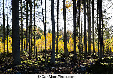 Golden colors in the forest