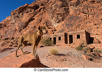 golden colour pure breed dog in the front of the cabins in the valley of fire nevada