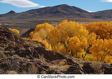 golden cottonwoods and foothills of nevada in the fall