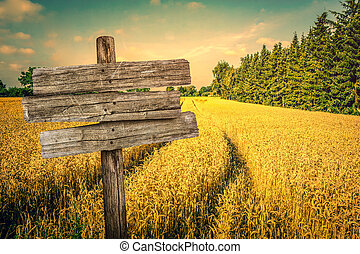 Golden crop field scenery with tire tracks