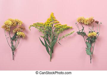 golden-daisy, 上に, パステル, pink., 花, pattern., fall.