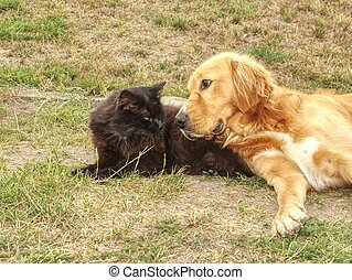 Golden dog play with black cat in the green grass. Friends play