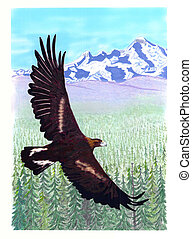 Golden Eagle over spruce forest