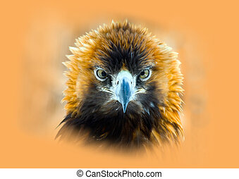 Golden eagle - Portrait of a golden eagle (Aquila chrysaetos...