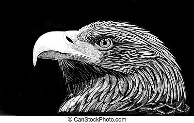 Golden Eagle - Aquila chrysaetos - scratchboard