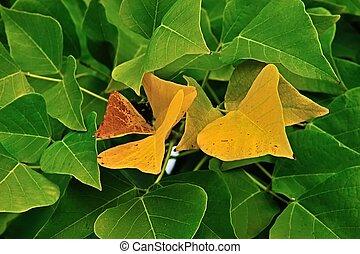 golden Erythrina leaves #2
