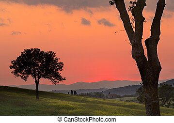 Golden evening in Tuscany