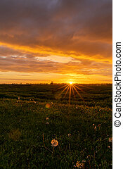 Golden evening sunset over a green meadow with dandelions in the foreground and a sun star