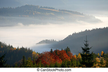 Golden fall in the mountains. Morning fog