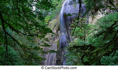 Golden Falls Dense Coastal Forest Southwest Oregon State -...