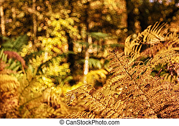 Golden fern leaves in a colorful autumn woodland scene HDR Filter.
