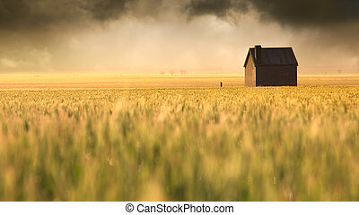 Golden Field - A beautiful sunrise over a rural field