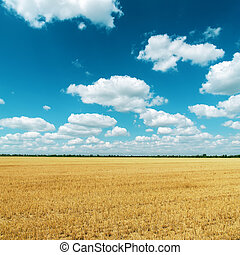 golden field after harvesting and clouds on deep blue sky