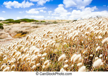 Golden Field - Shallow focus of soft wild grasses against a ...