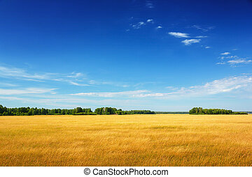 golden field under blue sky