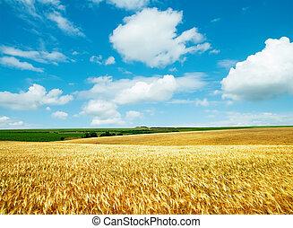 golden field under cloudy sky