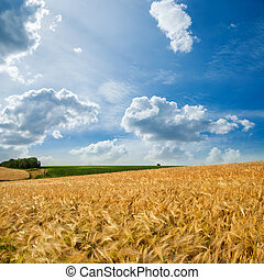 golden field under cloudy sky