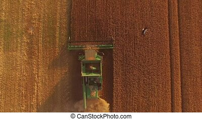 Golden field with combine. Agricultural machine in action.