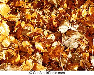 Golden foliage