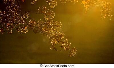 Golden foliage of tree on background of sunbeam