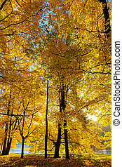 golden foliage of trees