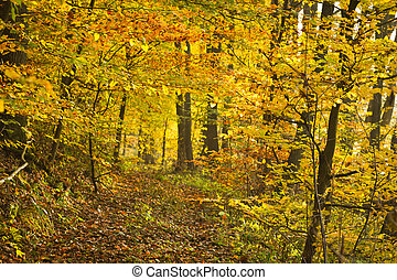 Golden footpath in the forest at autumn